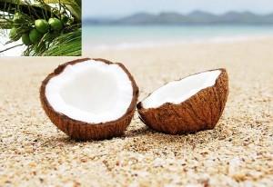ようこそココナッツオイル