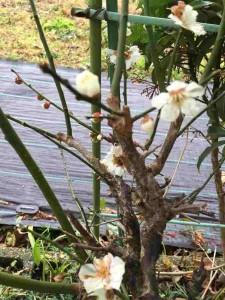 庭のかわいいお客様 2015-02 3