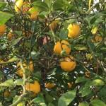 レモンの香り爽やか ~やみつきレモン鍋~
