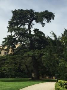 フォーシーズンズホテル フィレンツェ 2016-05 10